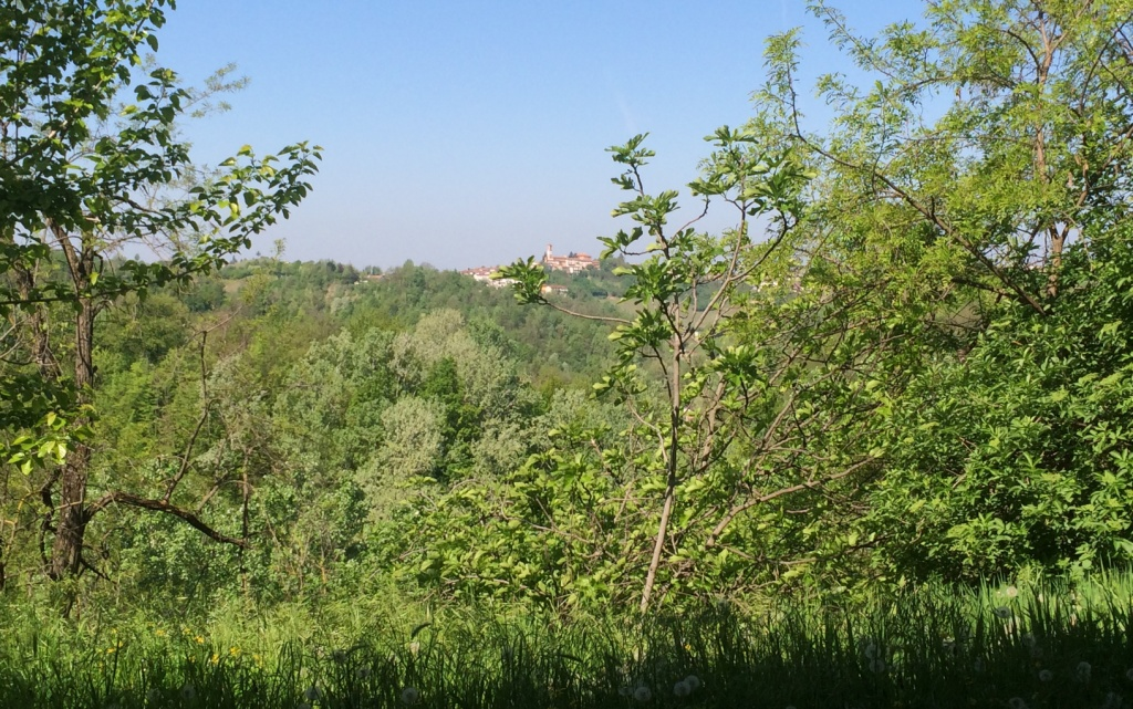 Property: Near Nizza Monferrato 6. Image 6